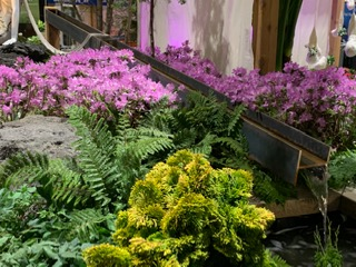 Columbus Home And Garden Show 2020.Columbus Landscape Association Home Garden Show